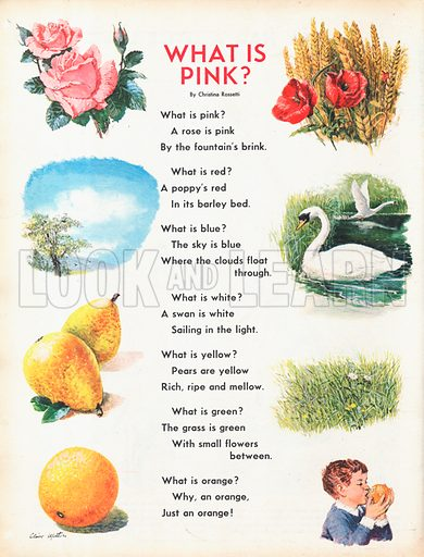 What is pink? sets the text of a poem by Christina Rossetti with vignettes of key images.