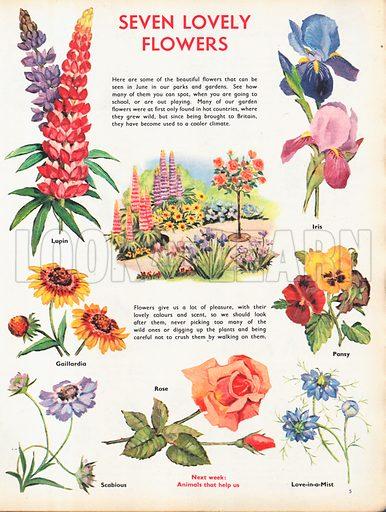 Seven lovely flowers shows vignettes of garden flowers around a border.