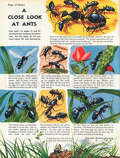 A close look at ants showing various tasks and activities.