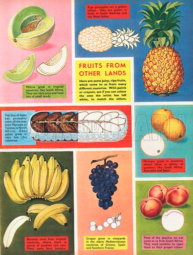 Fruits from other lands shows seven different fruits.