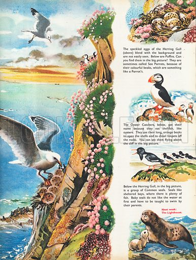 The Cove shows the varied bird life high above a sheltered bay at sunset.