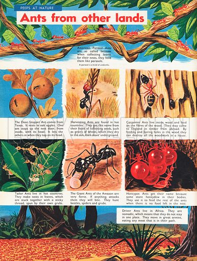Ants from other lands shows eight different species in various activities.