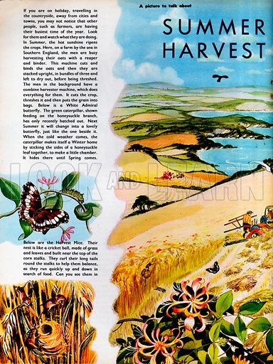 Men harvesting on a farm by the sea in Southern England.