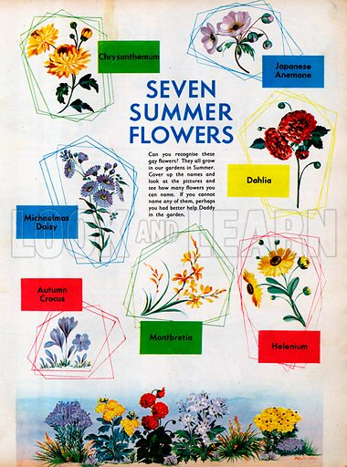 Seven summer flowers.