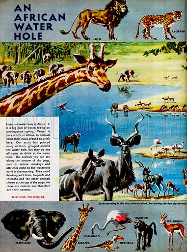 An African water hole, with a large variety of animals feeding there.
