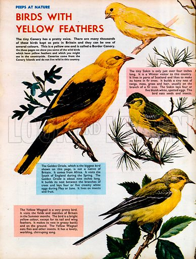 Birds with yellow feathers.