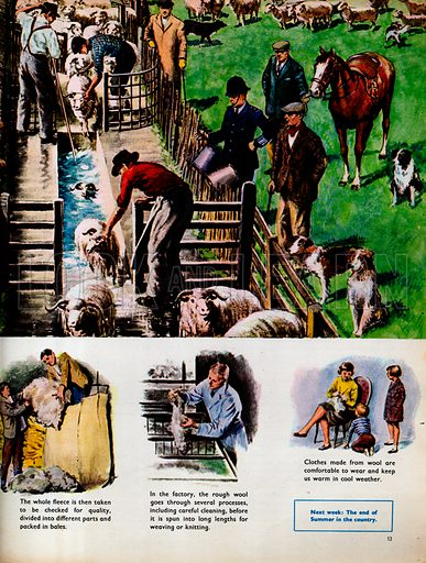 The Sheep Dip, with smaller pictures about wool production.