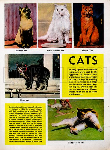 Cats shows five different breeds found in Britain.