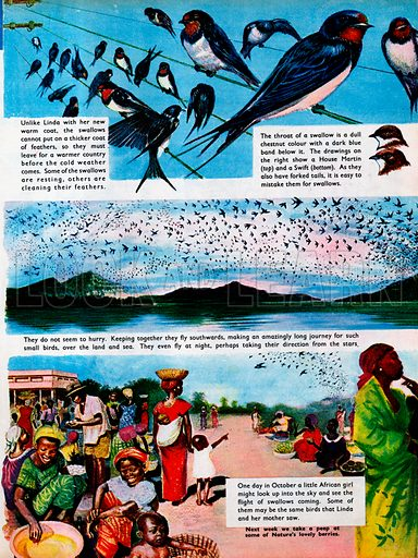 The swallows fly away, telling the story of the birds' migration.