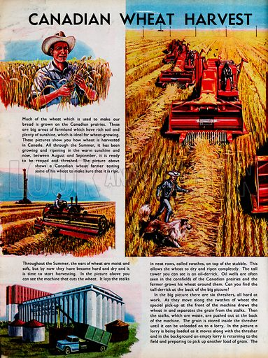 Canadian Wheat Harvest.