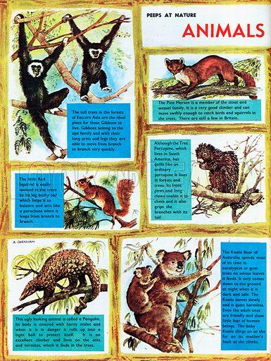 Animals which climb.