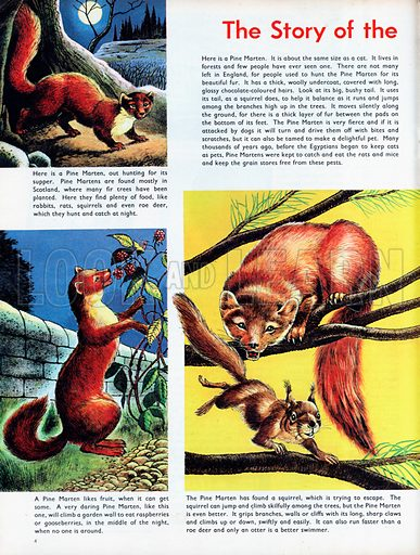 The Story of the Pine Marten.