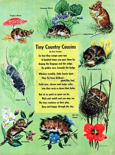 Illustrated poem by Eric Tansley entitled Tiny Country Cousins.