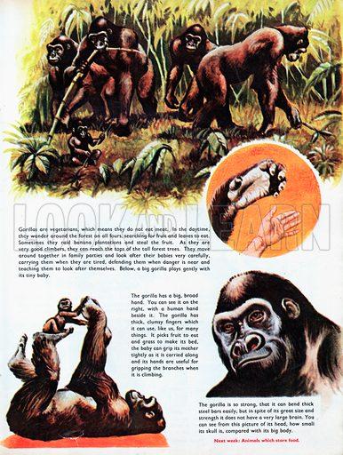 The Gorilla.