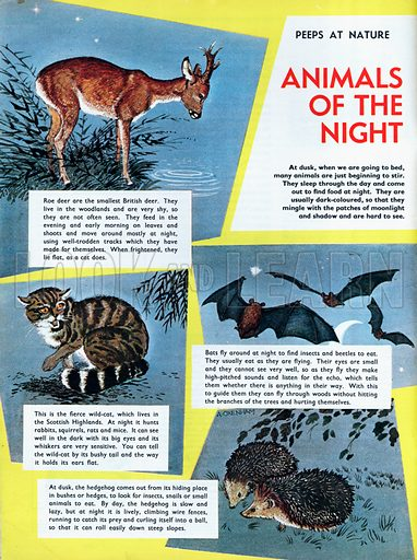 Animals of the night.