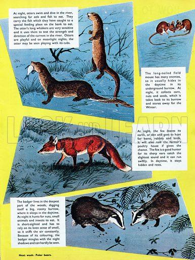 Animals of the night.