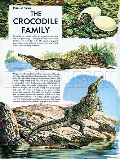 The Crocodile family.