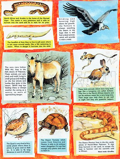 Animals which can live in the desert.