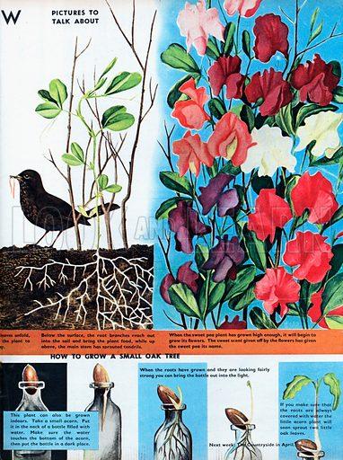 How seeds grow.