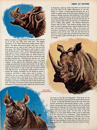 The Rhinoceros.