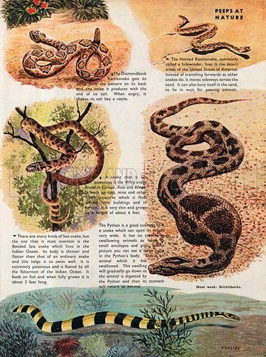 Snakes.