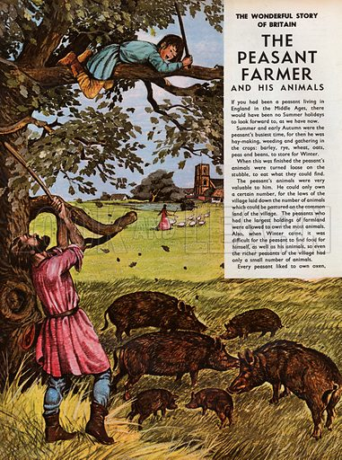 The Wonderful Story of Britain: The Peasant Farmer and His Animals. The swineherd looks after pigs, finding them acorns to eat, while in the distance the gooseherd leads geese to the village pond.