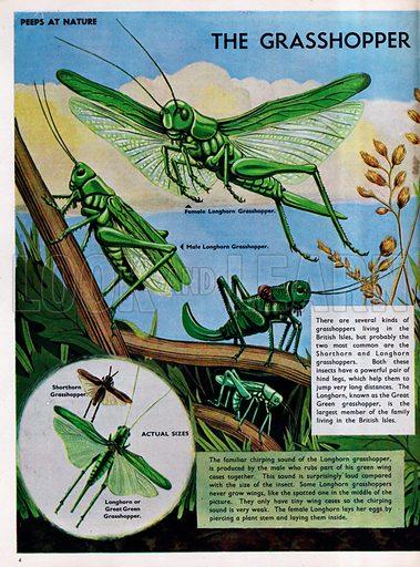 The Grasshopper Family.