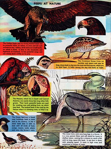 Birds and their useful beaks.