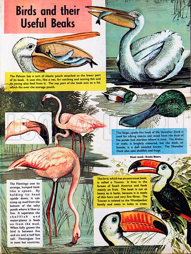 Birds and their useful beaks.