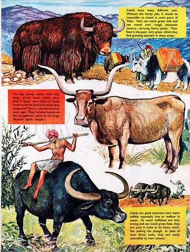 Different kinds of cattle.
