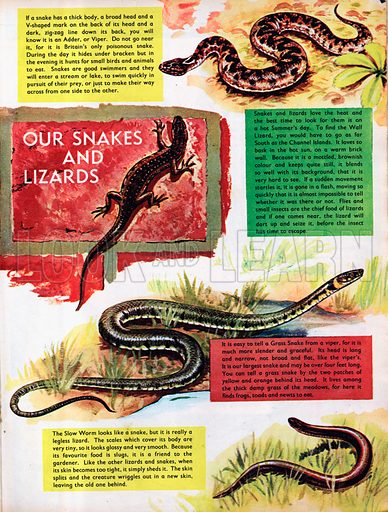Our Snakes and Lizards.