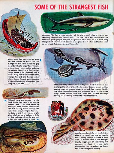 Some of the strangest fish.