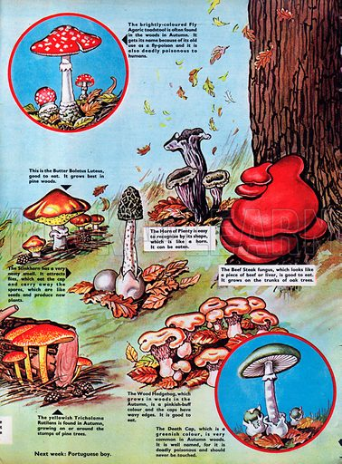 Mushrooms, Toadstools and other things called fungi.