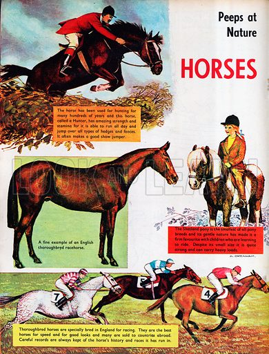 horses, picture, image, illustration