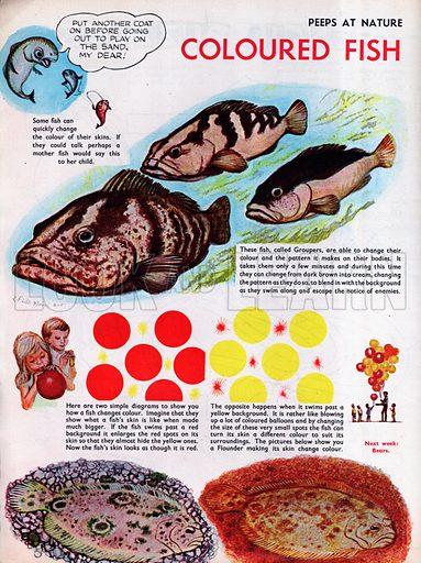 Coloured fish.
