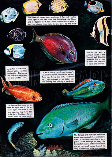 Fishes of the coral reefs.