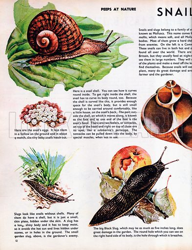 Snails and Slugs.