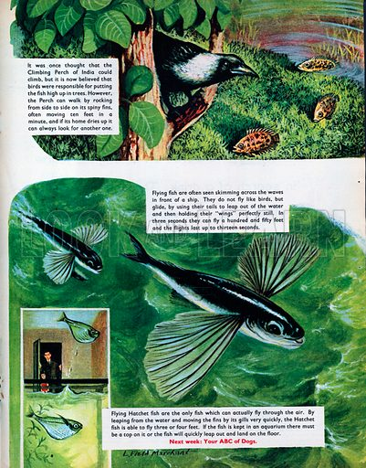Fish that jump, walk and fly.