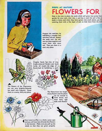 Flowers for your garden.