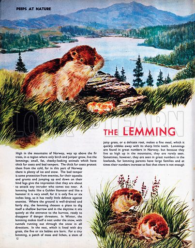 The Lemming.