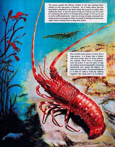 Shrimps, Prawns and Crawfish.