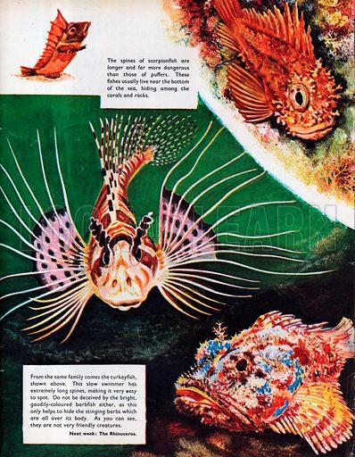 Puffers and Scorpionfish.