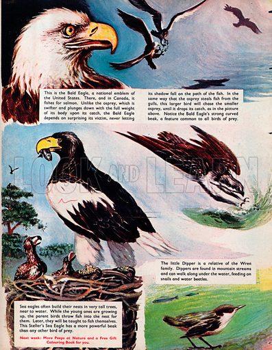 Land birds which fish.