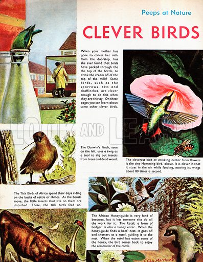 Clever Birds.