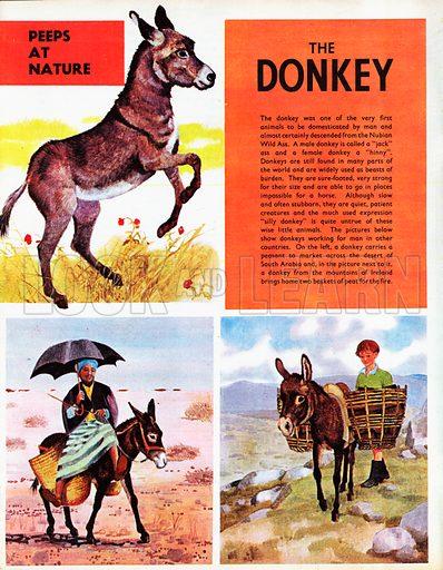 The Donkey.