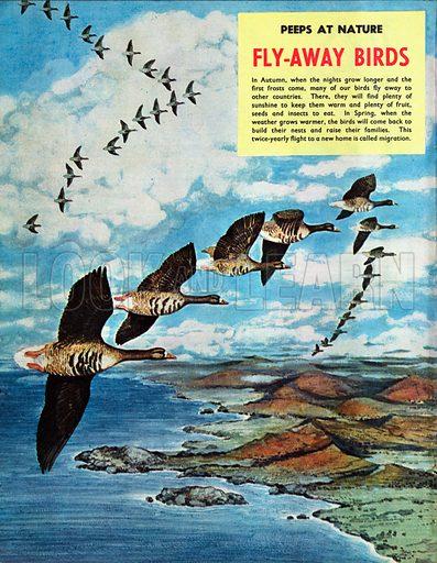 Fly-away birds.