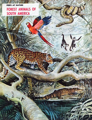 Forest Animals of South America.