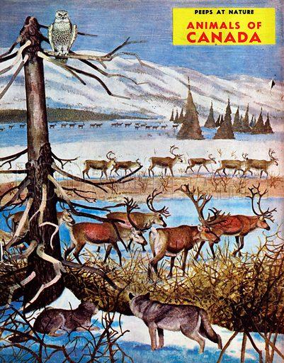 Animals of Canada.