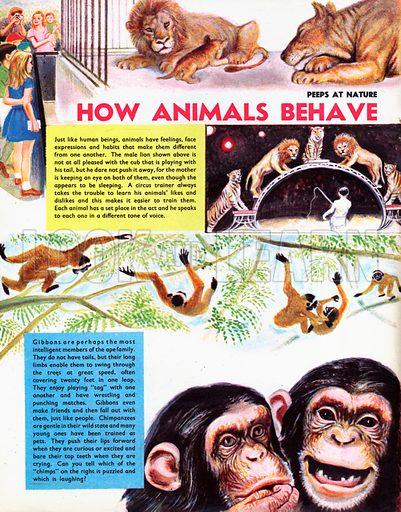 How Animals Behave.