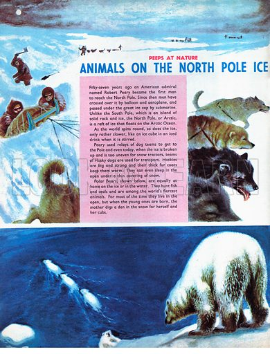 Animals on the North Pole Ice.